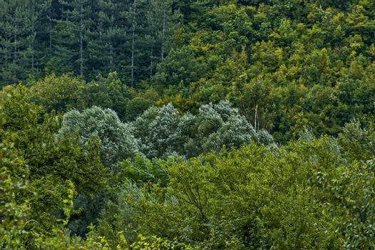 Autumn forest with coniferous and deciduous  trees and bushs in the Sredna gora mountain