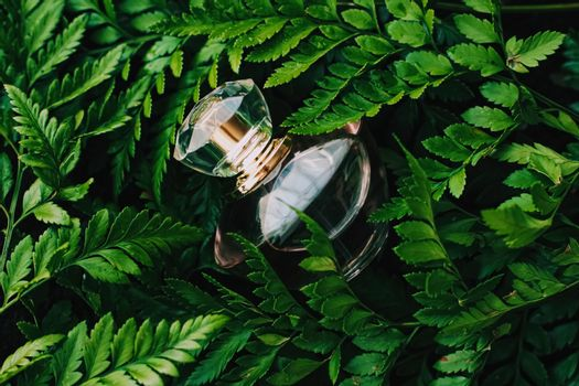 Perfume bottle with aromatic tropical scent in nature, luxury fr