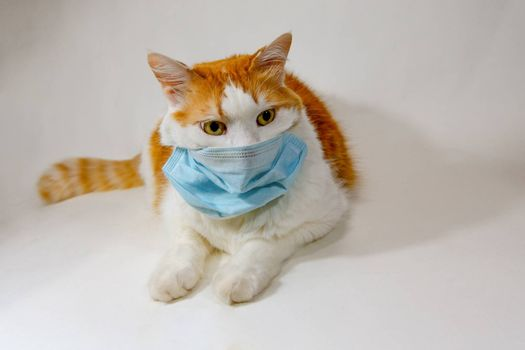 Cat in a medical, antiviral mask  against a white background