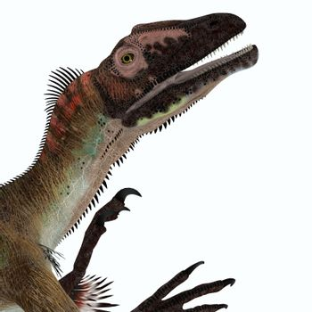 Utahraptor was a carnivorous theropod dinosaur that lived in Utah, United States during the Cretaceous Period.