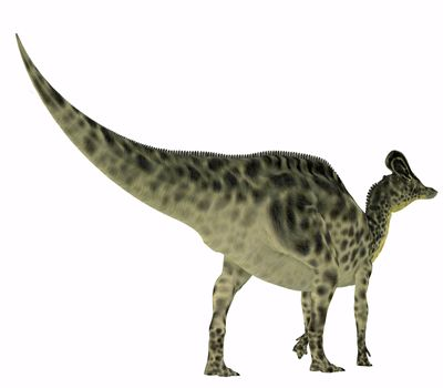 Velafrons was a herbivorous Hadrosaur dinosaur that lived in Mexico during the Cretaceous Period.