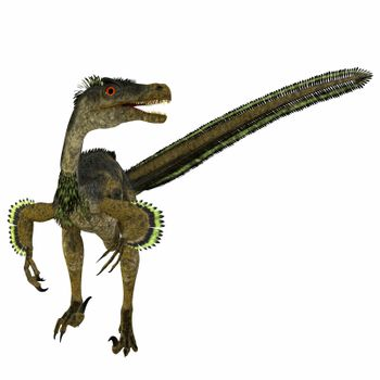 Velociraptor was a carnivorous theropod dinosaur that lived in Mongolia, China during the Cretaceous Period.