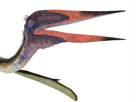Zhejiangopterus was a carnivorous Pterosaur reptile that lived in China during the Cretaceous Period.