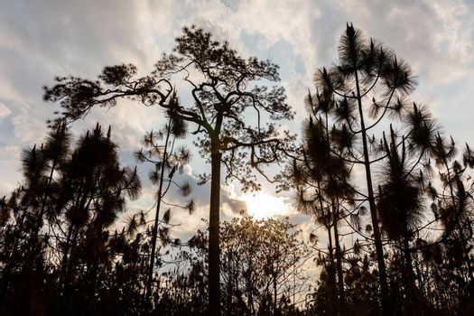 Silhouetted scene of trees burned by wildfire in tropical rainforest of Phu Kradueng national park, Loei, Thailand.