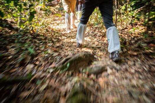 Motion blur technique of walking legs in speed covered by white long socks on tropical forest trekking trail to protect animal on ground and injury.