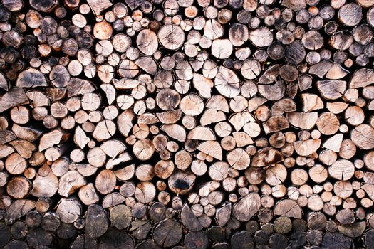 sawn and deposited beech firewood