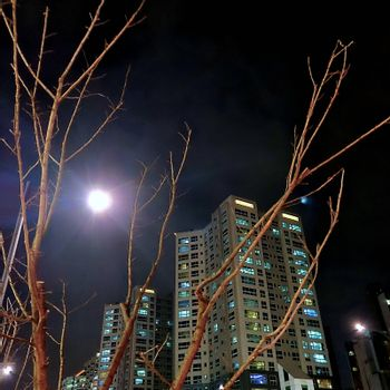 Residential building at night with moon shining bright and tree branches in foreground