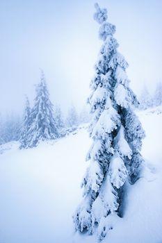 Dreamy snowy spruce tree