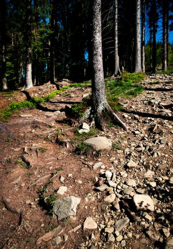 forest with stone pavement