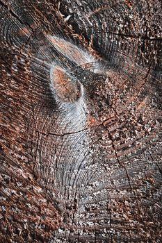detail of sawn wood