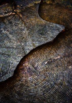 dark sawn old stump