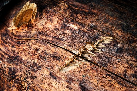 detail of wood with scratch