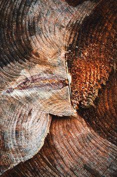 detail of sawn rotten stump
