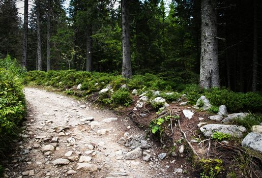 stone walk through the spruce forest