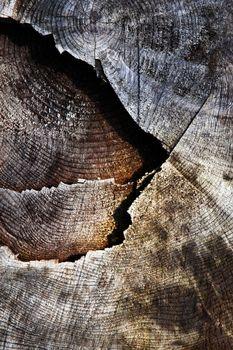 detail old sawn stump