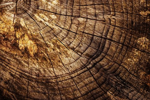 abstract detail of an old stump sawn