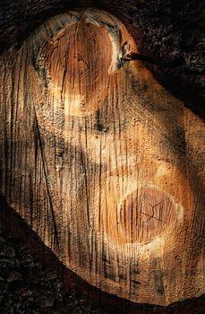 detail sawn branch of spruce