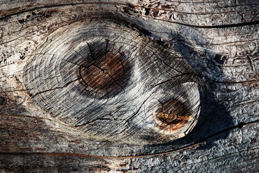 Two knot on wood