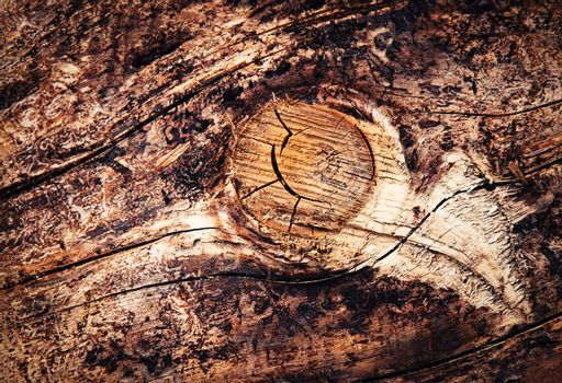 detail sawing branch