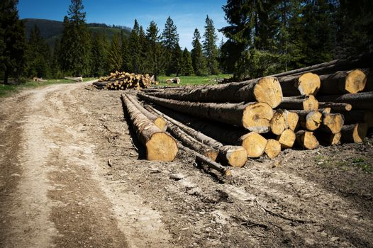 piles of spruce wood in the country