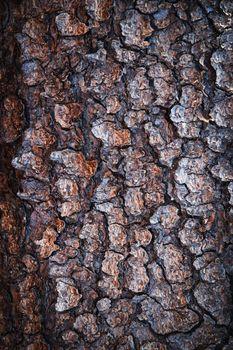 spruce tree bark
