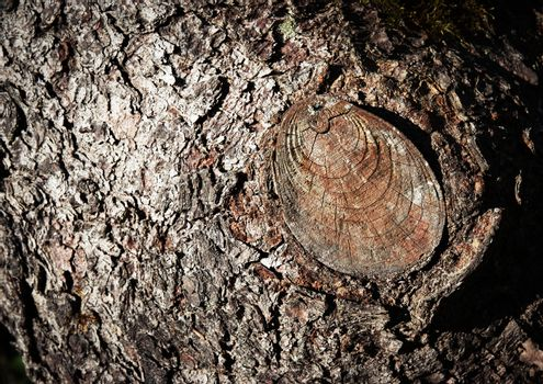 cut branch on tree trunk