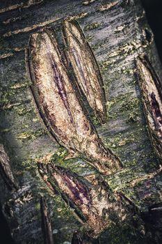 old dark tree bark with damage