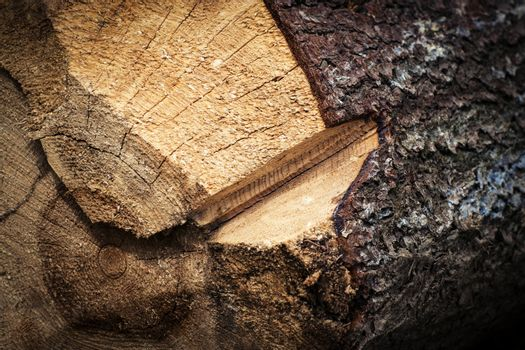 a detail of the cutting of spruce timber