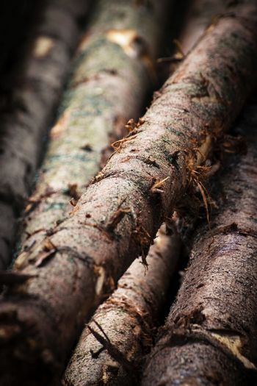detail wooden spruce trunk