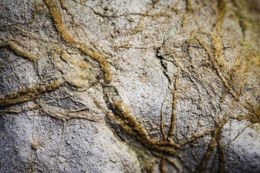 detail of old limestone macro