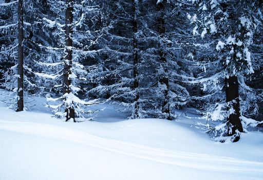 seasonal background snowy forest