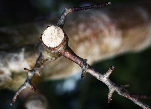 sawn detail on twig