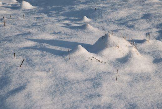 elongated shadows on a snowy meadow