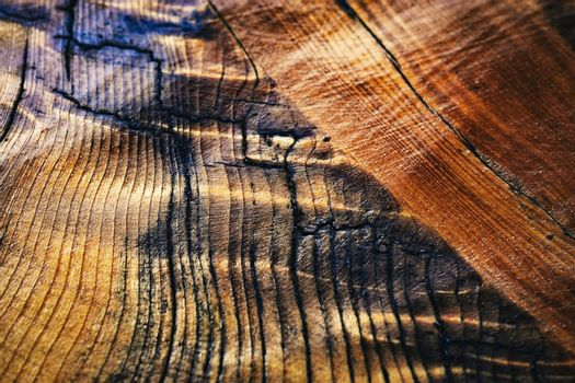 abstract structure of lacquered spruce wood