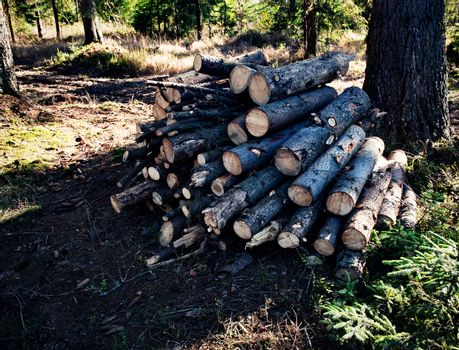 pile of spruce sawing