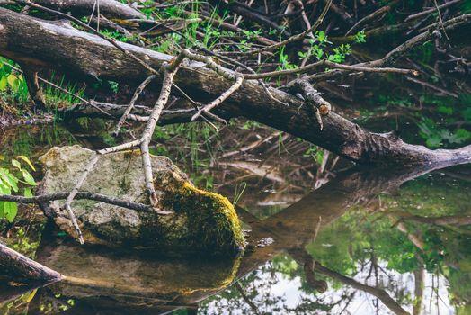 Sunlight on mossy stone