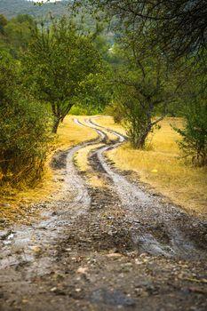 Autumnal landscape of Kakheti region