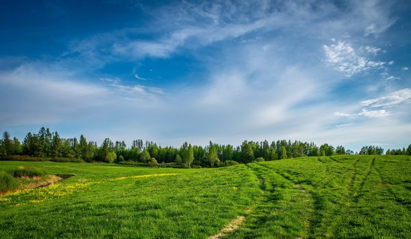 field of grass and perfect sky, Grasslands Forests.