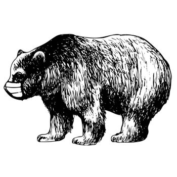 hand drawn illustration of bear with mask on white background