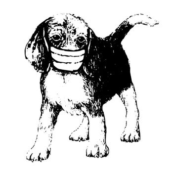 freehand sketch illustration of Beagle dog with mask doodle hand drawn