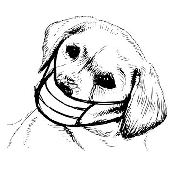 freehand sketch illustration of Labrador Retriever dog with mask doodle hand drawn