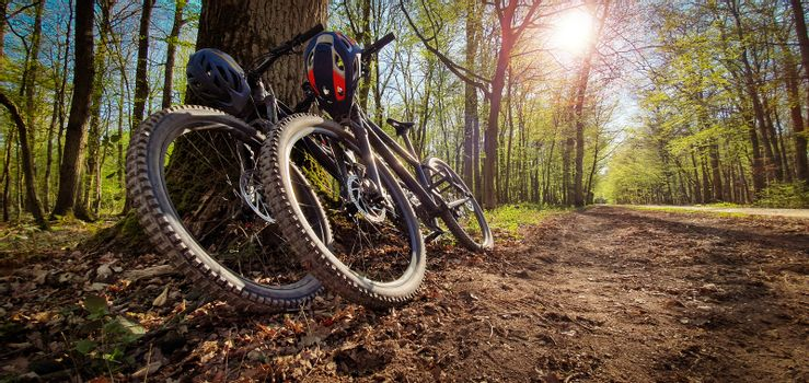 Two mountain bikes leaned on a tree next to a beautiful green forest trail with sun shining through the trees. Mountain biking concept.