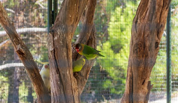 Colorful parrots in a cage at a zoo. Greece.