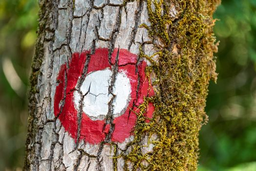 The round white and red tourist trail sign painted on the tree. The green leaves as background.