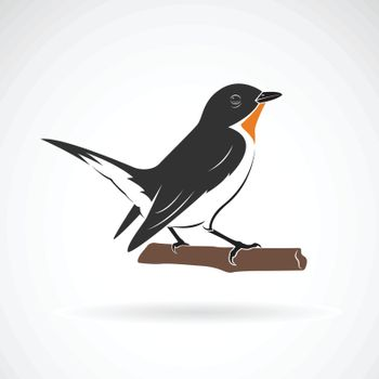 Taiga Flycatcher or Red throated Flycatcher Bird (Ficedula albicilla) on white background. Birds. Animals. Easy editable layered vector illustration.