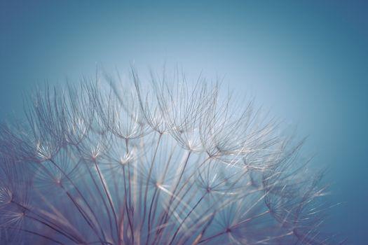Gentle dandelion flower