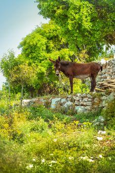 Nice domestic donkey