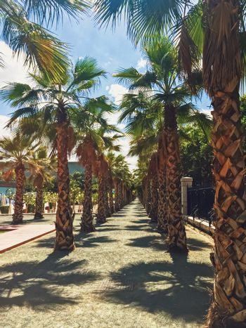 Public parks and streets of Malaga, the capital city of Andalucia region in Spain, Southern European destination