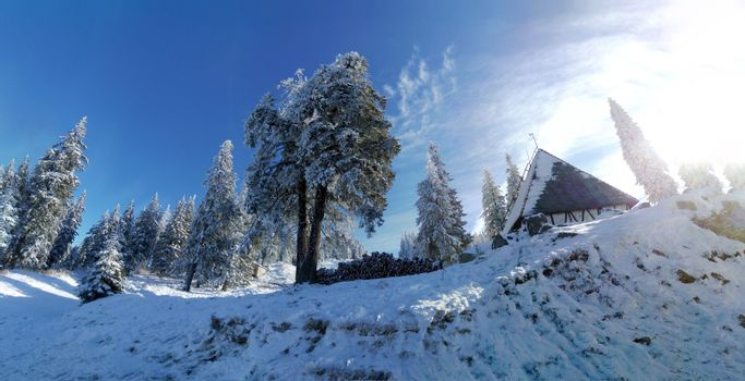 Sunny winter landscape with pines covered in snow and a traditional chalet.