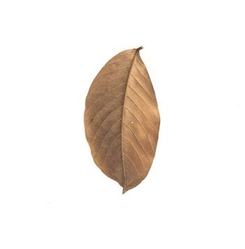 brown dry leave